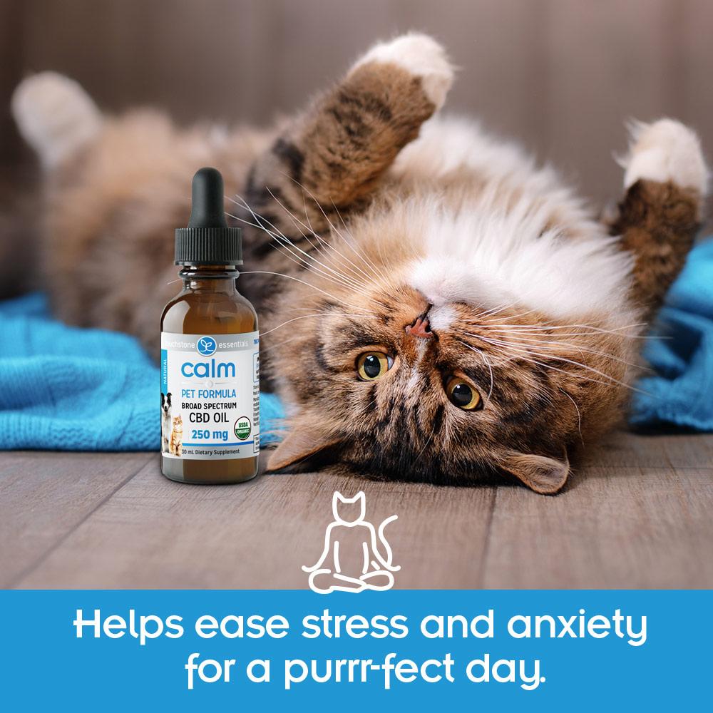 Calm Pet Formula Purrfect Day
