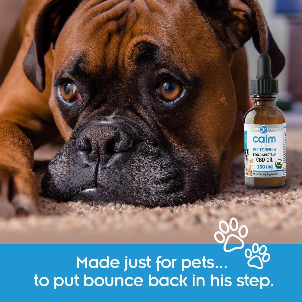 Calm Pet Formula Bounce Back