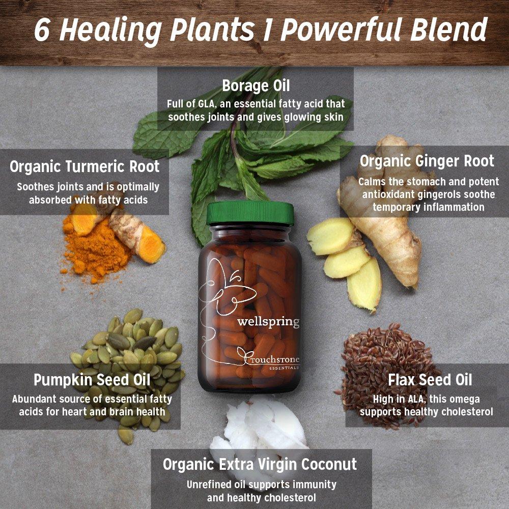 6 Healing Plants in 1 Powerful Blend
