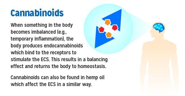 How Cannabinoids Work in the Body