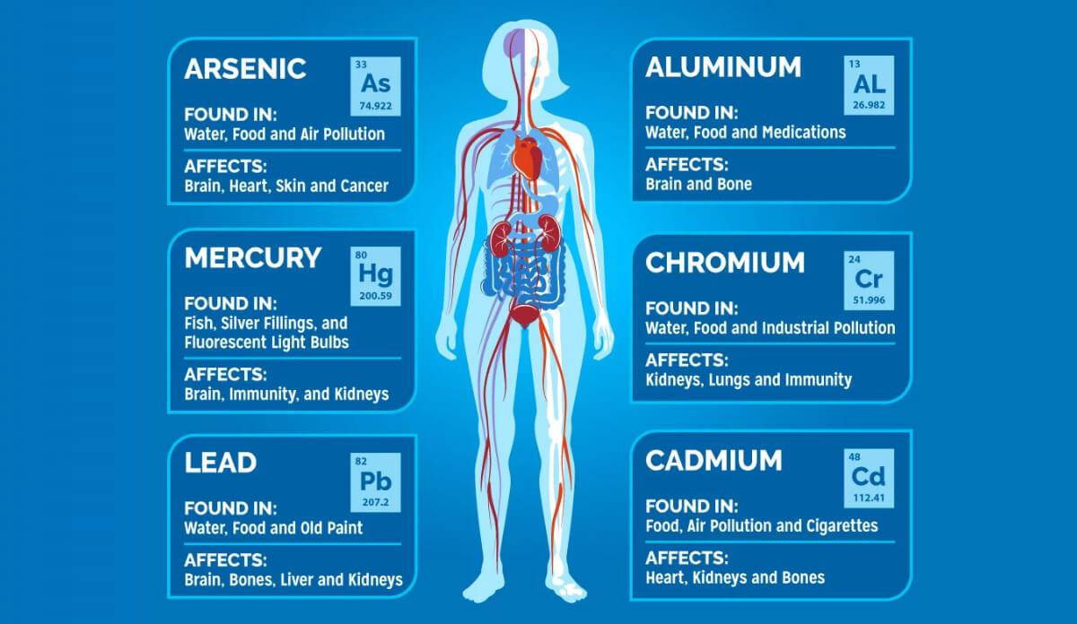 Body Toxin Chart