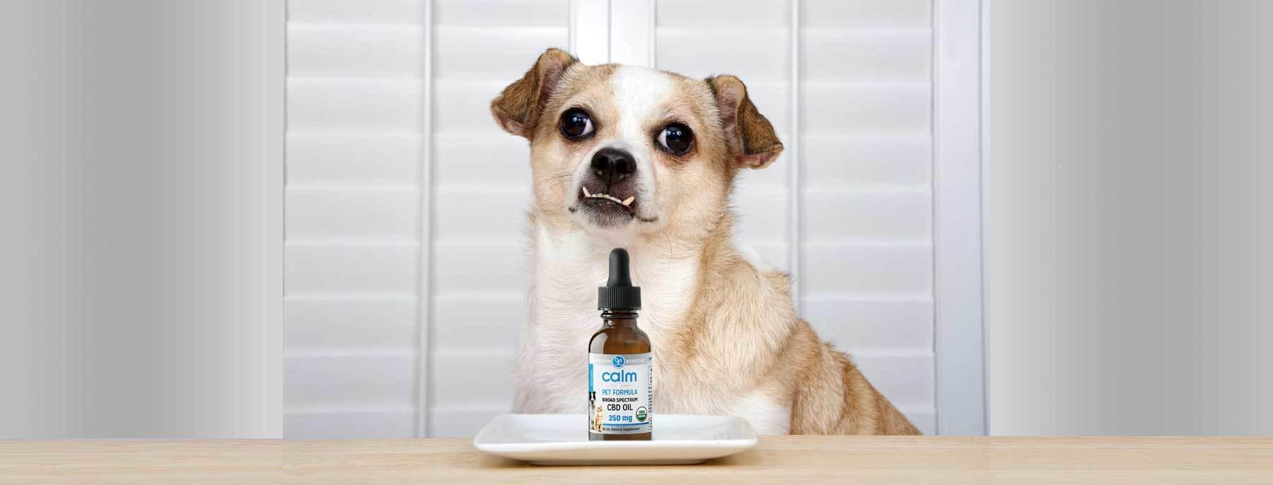Organic Pet CBD - Calm Pet