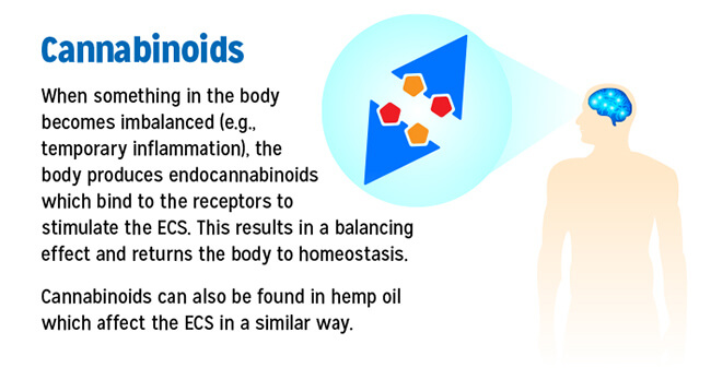 How Cannabinoids Work in the Body